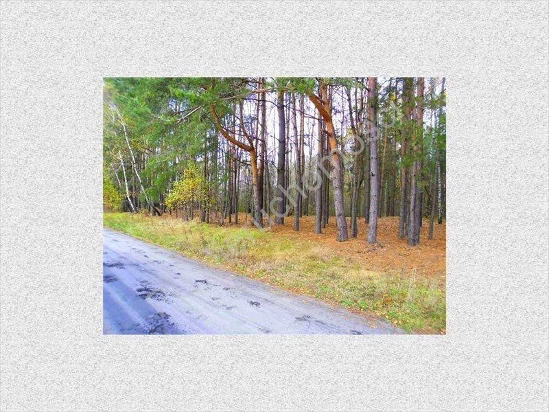 Działka leśna na sprzedaż Wólka Wybraniecka  12500m2 Foto 2