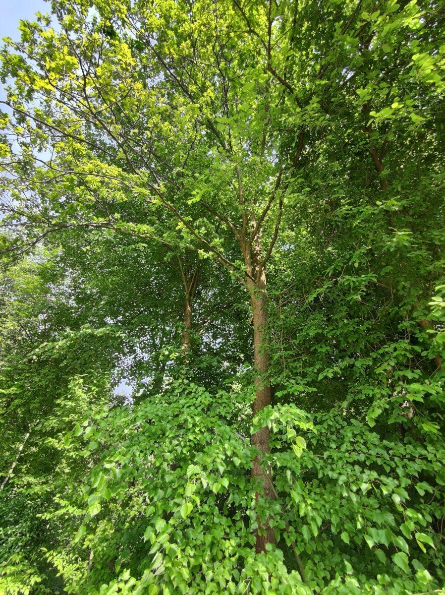 Działka leśna na sprzedaż Borówna  3600m2 Foto 3