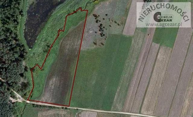 Działka siedliskowa na sprzedaż Dłużew  16900m2 Foto 2