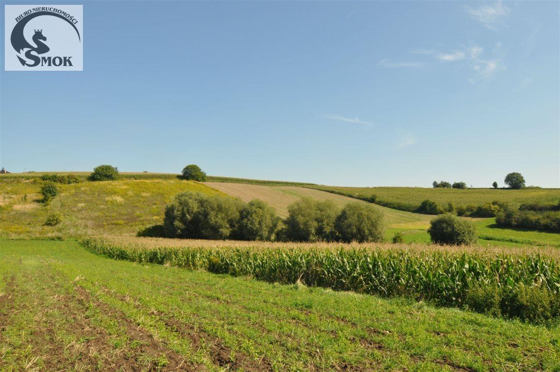 Działka rolna na sprzedaż Pietrzejowice  10000m2 Foto 1