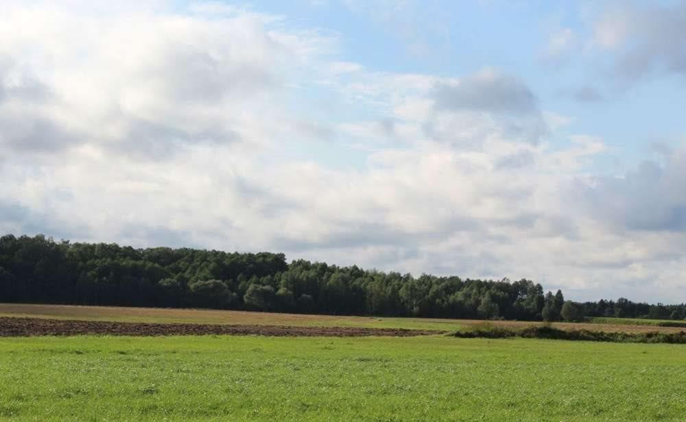Działka rolna na sprzedaż Malesze  164100m2 Foto 9