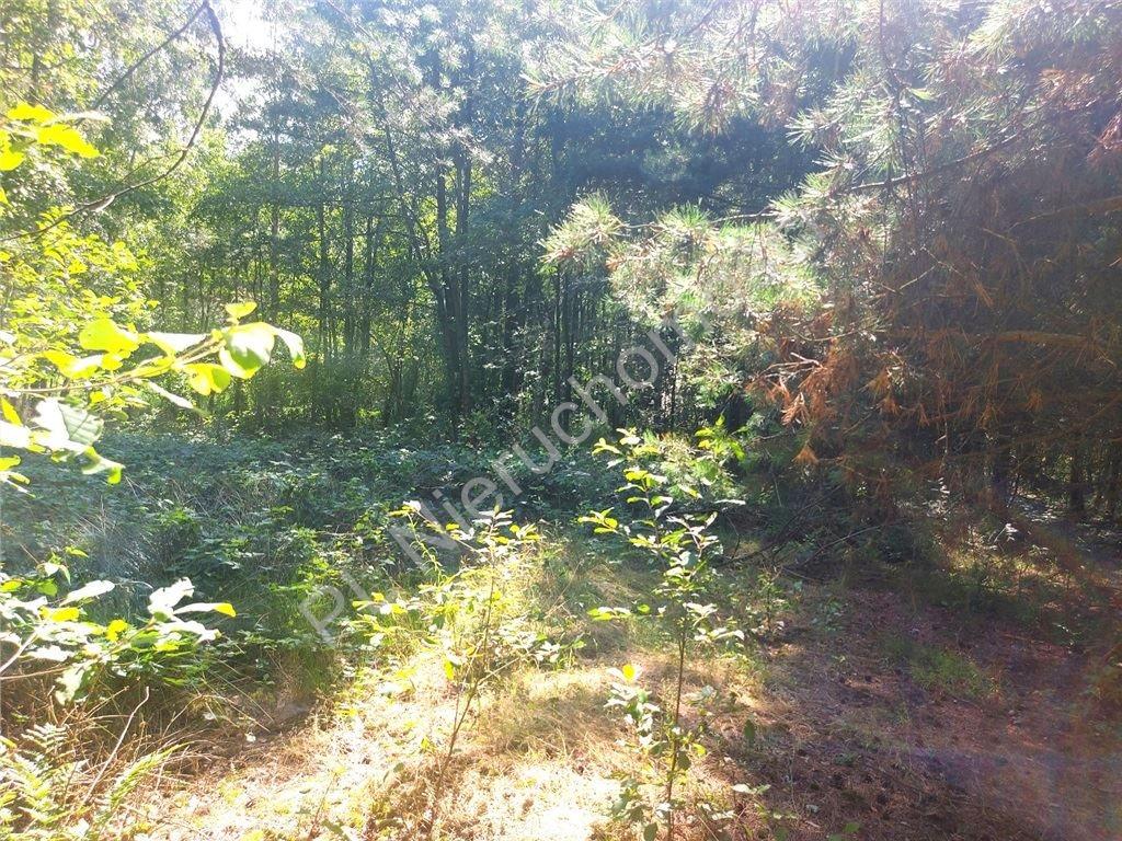 Działka rolna na sprzedaż Choiny  60500m2 Foto 9