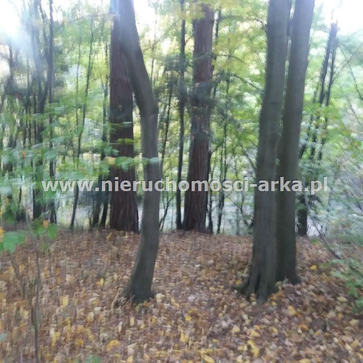 Działka leśna na sprzedaż Limanowa  3400m2 Foto 1