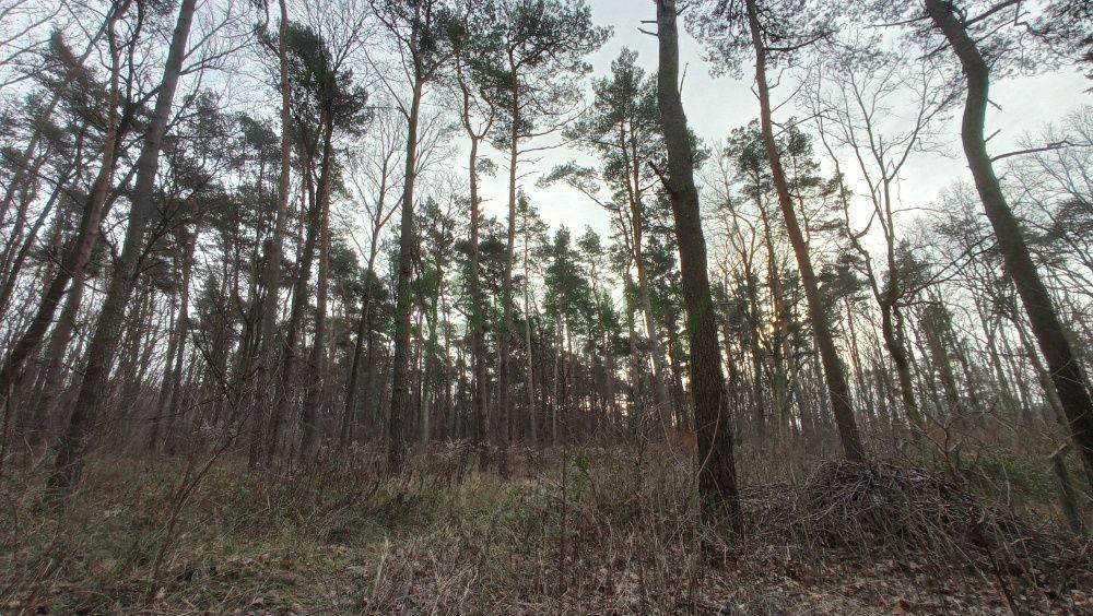 Działka leśna z prawem budowy na sprzedaż Warszawa, Wawer, Anin  2030m2 Foto 2