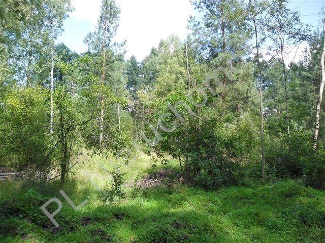 Działka rolna na sprzedaż Cisówka  30300m2 Foto 5