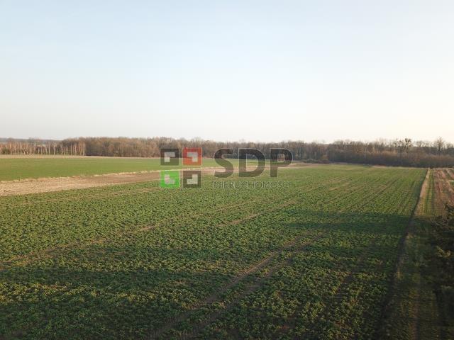 Działka siedliskowa na sprzedaż Bogdaszowice, Dębowa  28000m2 Foto 7
