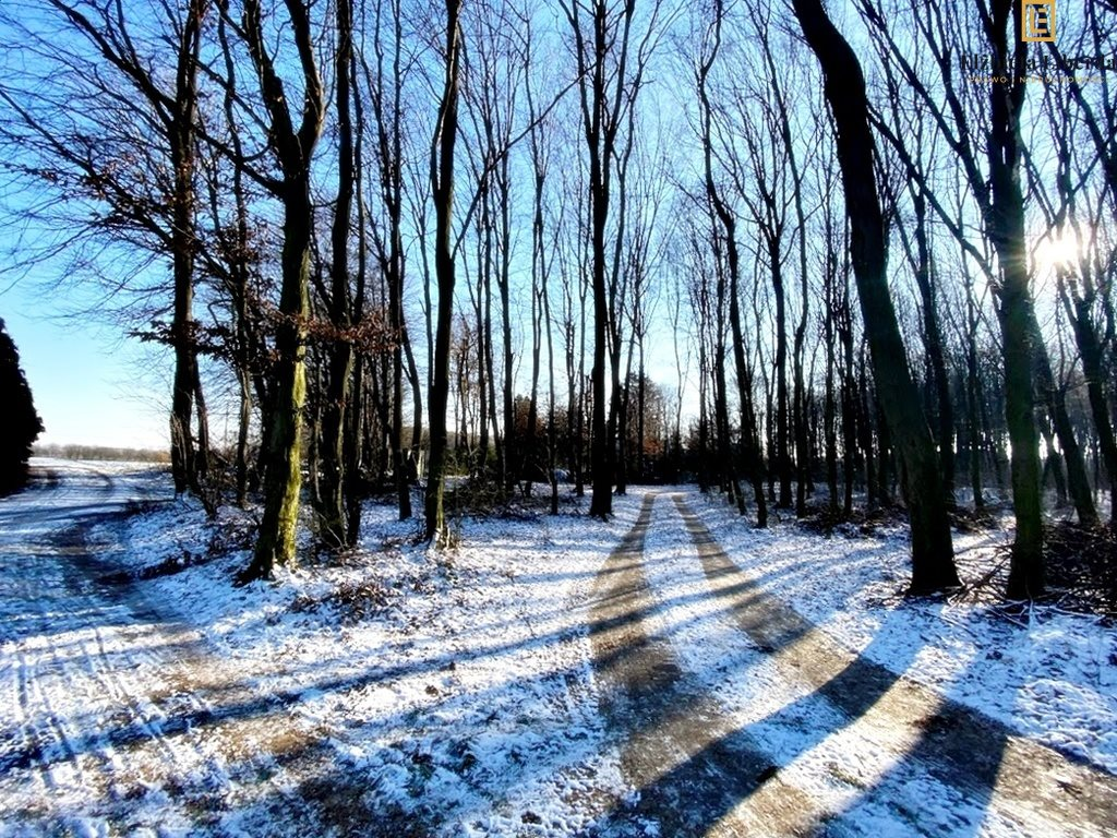 Działka leśna z prawem budowy na sprzedaż Konopnica  8900m2 Foto 2