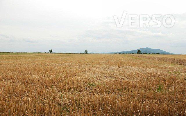 Działka siedliskowa na sprzedaż Michałowice, Mirosławicka  3000m2 Foto 5