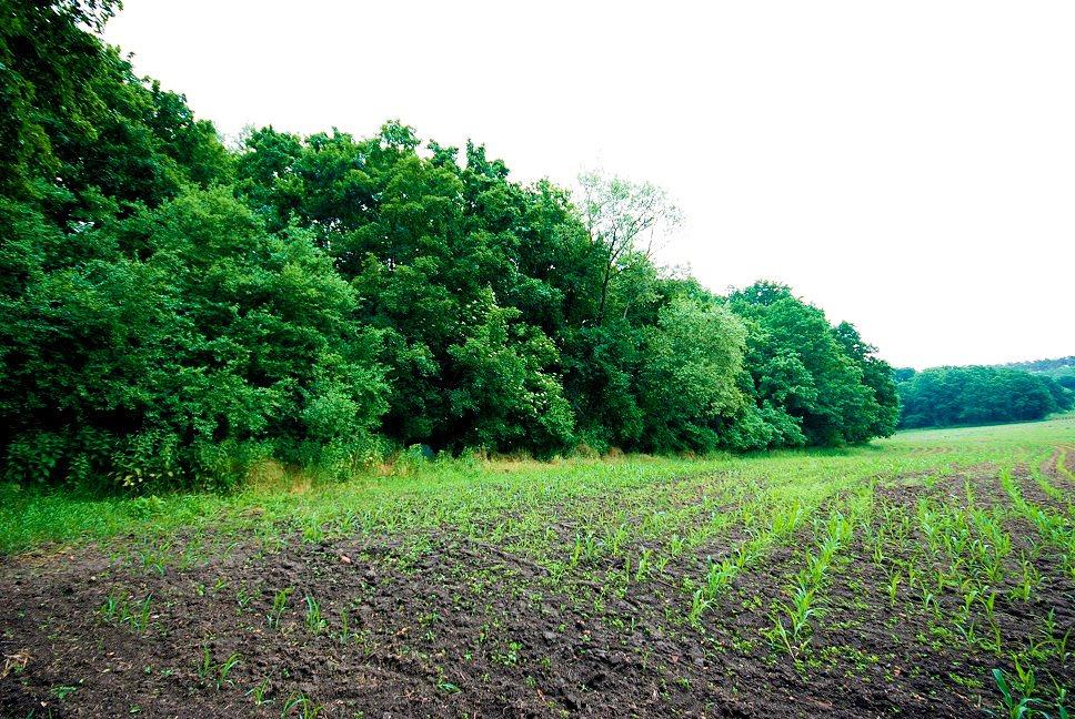 Działka leśna na sprzedaż Grodzanów  46000m2 Foto 13