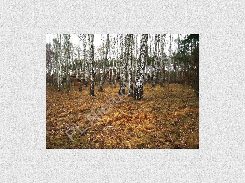 Działka leśna na sprzedaż Stefanowo  1900m2 Foto 1