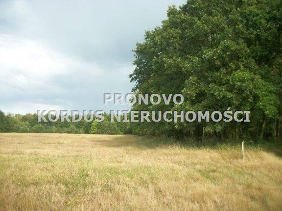 Działka leśna na sprzedaż Wojtkowa, Trzcianiec  1958400m2 Foto 2