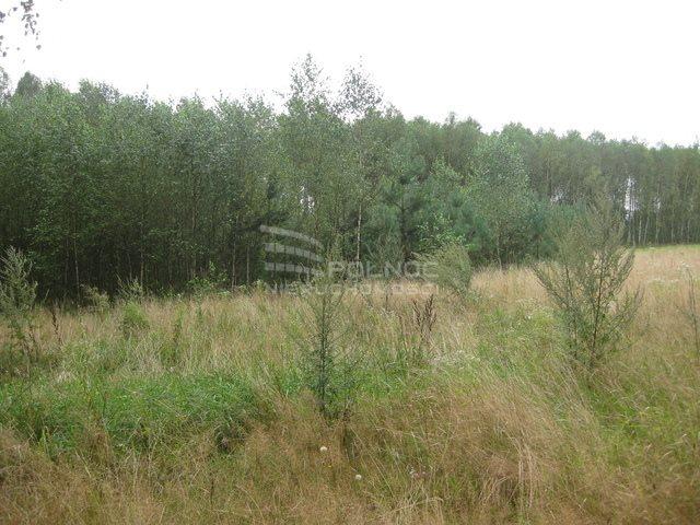 Działka rolna na sprzedaż Kudrycze  3151m2 Foto 5