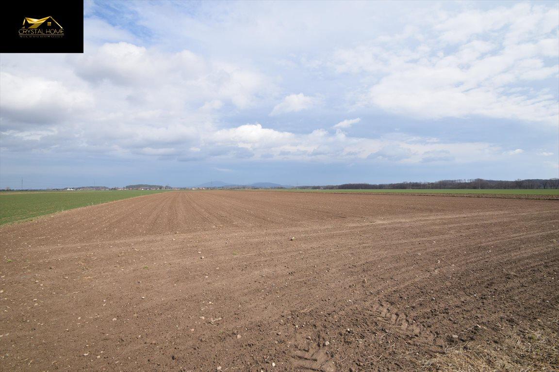 Działka rolna na sprzedaż Burkatów  23600m2 Foto 4