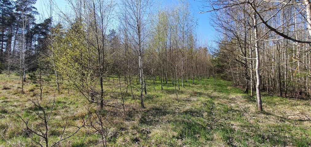 Działka leśna na sprzedaż Stary Cydzyn  8000m2 Foto 3