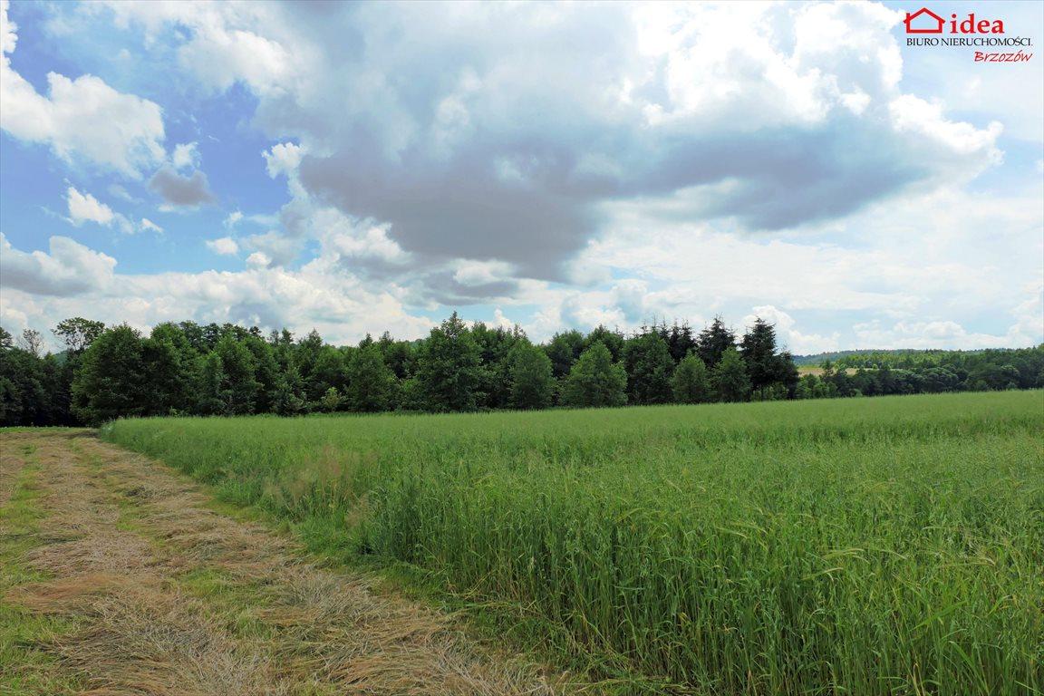 Działka rolna na sprzedaż Orzechówka  3000m2 Foto 1