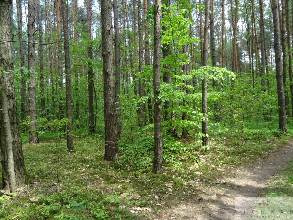 Działka leśna z prawem budowy na sprzedaż Kwiatkowice-Las  2420m2 Foto 5