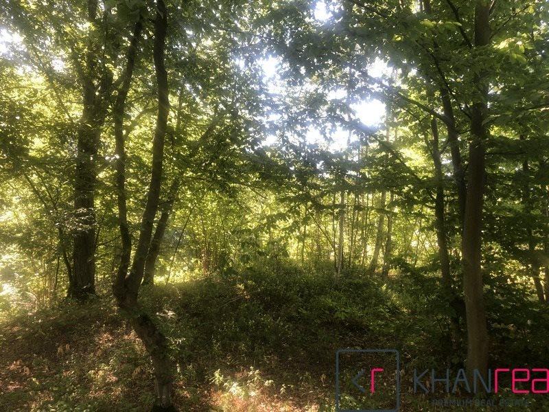 Działka leśna na sprzedaż Sobików  15000m2 Foto 6