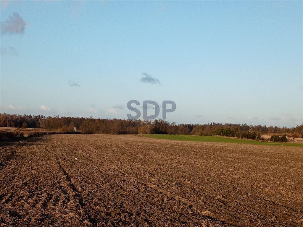 Działka rolna na sprzedaż Bogdaszowice  53800m2 Foto 3