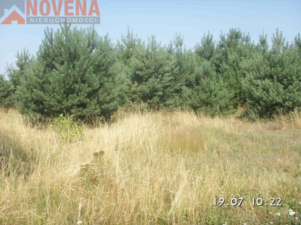 Działka rolna na sprzedaż Radecz, Radecz  53000m2 Foto 1