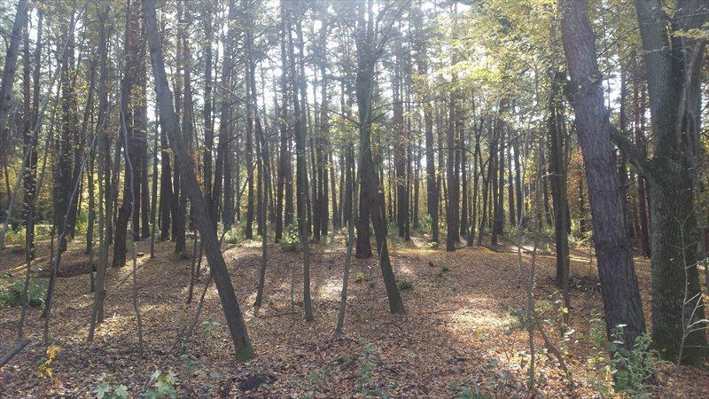 Działka leśna z prawem budowy na sprzedaż Piaseczno, Aleja Kalin  4746m2 Foto 1
