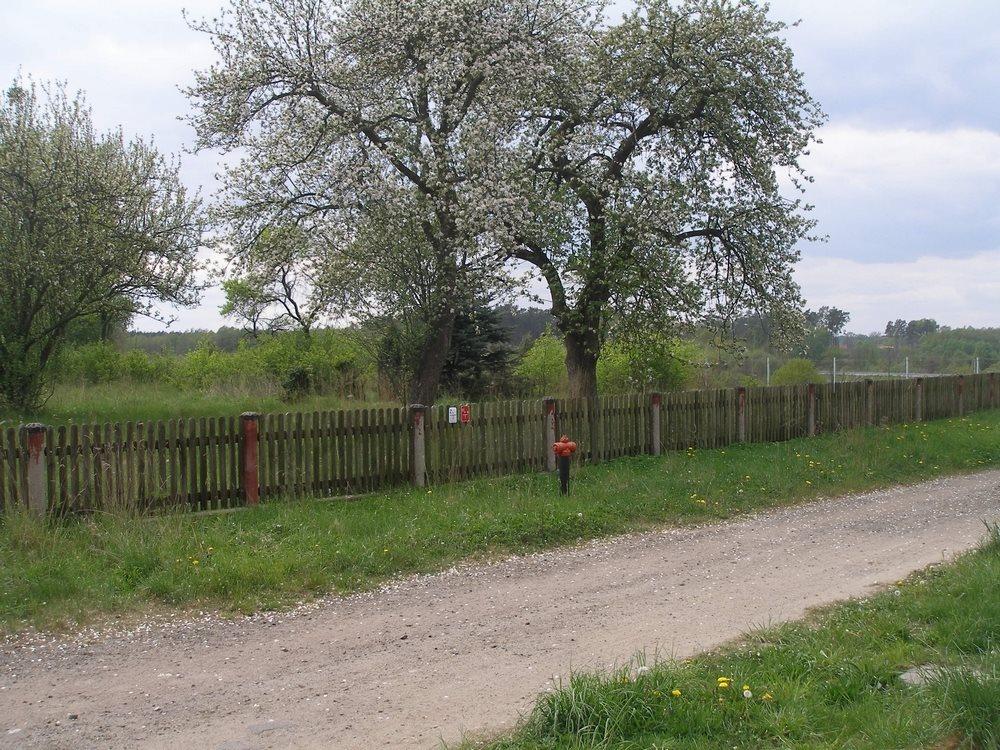 Działka budowlana na sprzedaż Goleniów  3044m2 Foto 1
