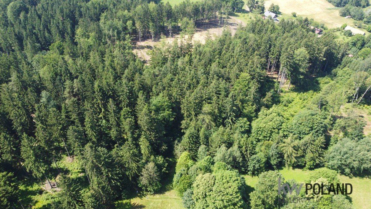 Działka rolna na sprzedaż Kudowa-Zdrój, Pstrążna  6416m2 Foto 3