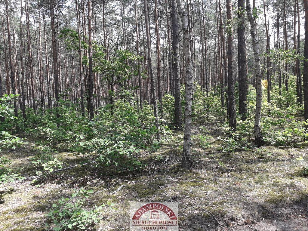 Działka leśna z prawem budowy na sprzedaż Warszawa, Wawer, Międzylesie  2839m2 Foto 3