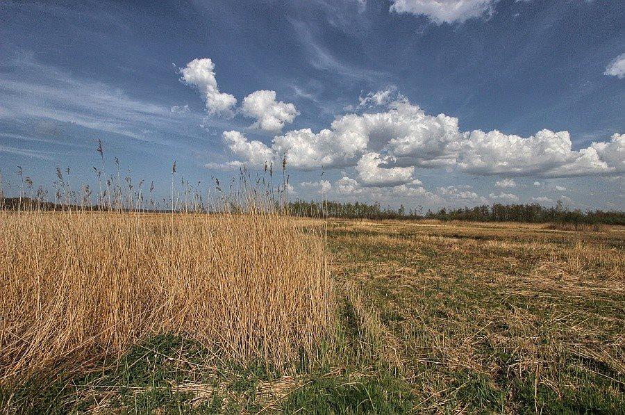 Działka rolna na sprzedaż Kołczewo  22223m2 Foto 4