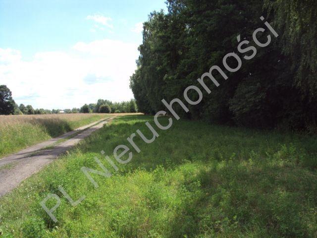Działka rolna na sprzedaż Holendry Baranowskie  4000m2 Foto 3