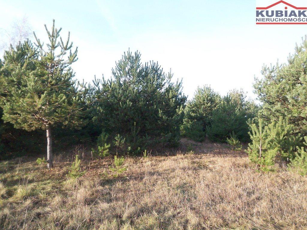 Działka leśna z prawem budowy na sprzedaż Książenice  2880m2 Foto 2