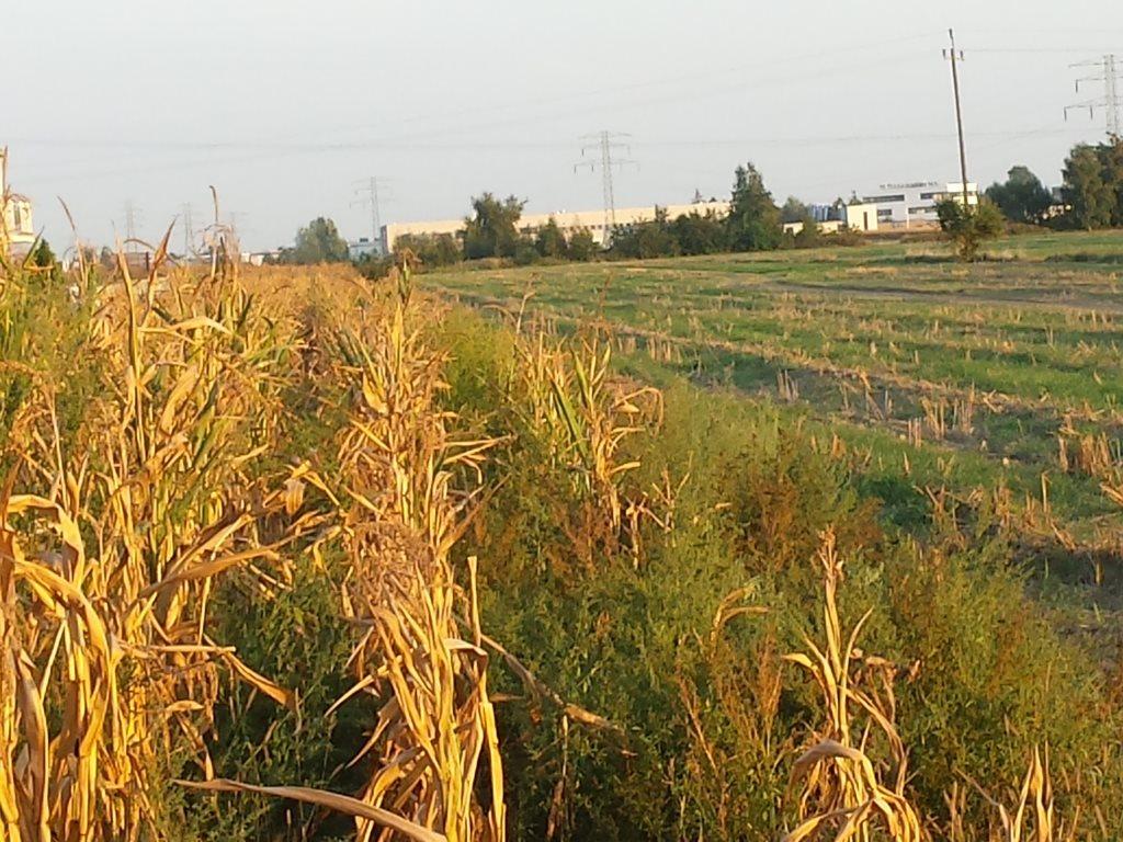 Działka przemysłowo-handlowa na sprzedaż Plewiska  11000m2 Foto 2