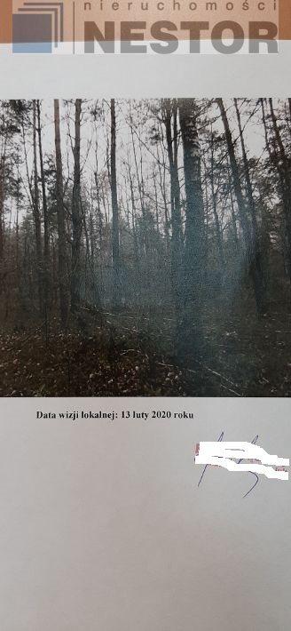 Działka leśna na sprzedaż Hołubla  25700m2 Foto 3