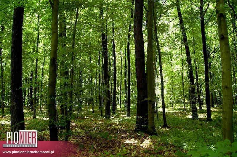 Działka leśna na sprzedaż Lipusz  182000m2 Foto 1