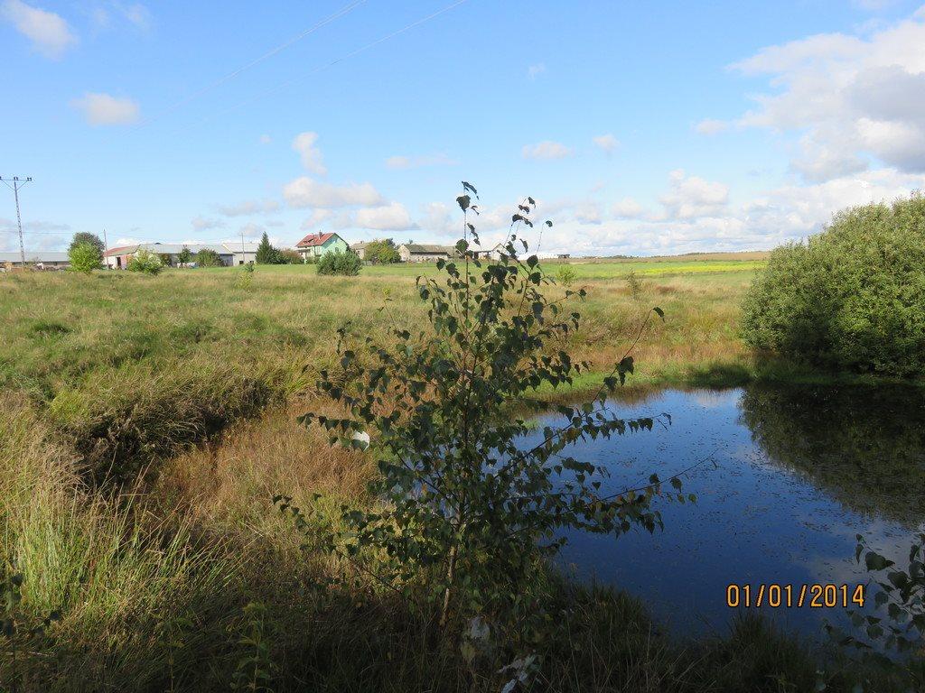 Działka siedliskowa na sprzedaż Dąbrowa  11000m2 Foto 1