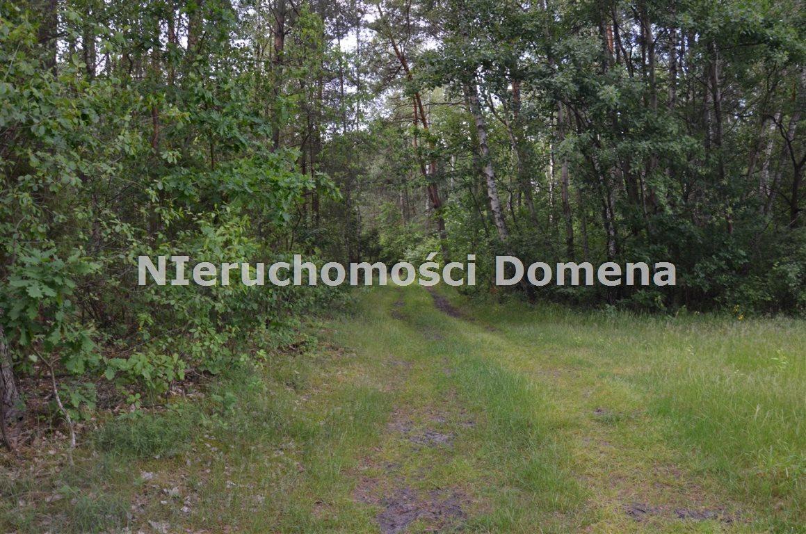 Działka leśna na sprzedaż Poświętne  2100m2 Foto 2