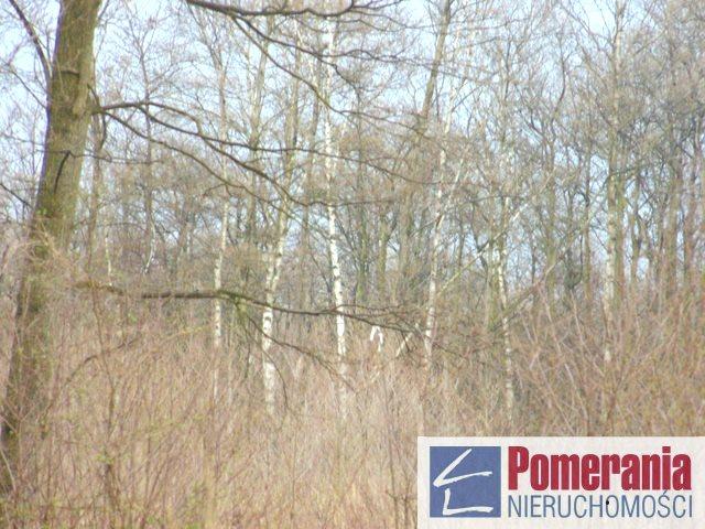 Działka siedliskowa na sprzedaż Kołczewo  9357m2 Foto 5