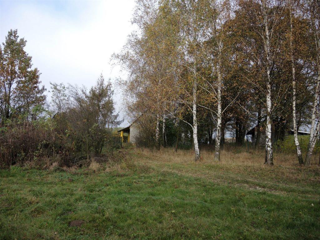 Działka rolna na sprzedaż Podlindowo  38000m2 Foto 5
