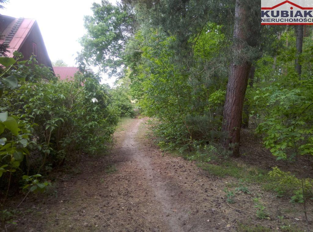 Działka leśna na sprzedaż Powązki  3600m2 Foto 3