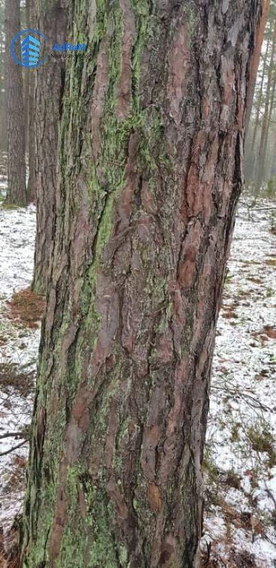 Działka leśna na sprzedaż Olszowa Droga  20000m2 Foto 2