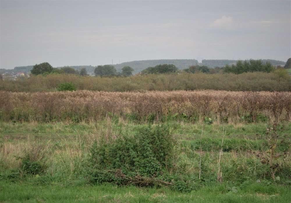 Działka rolna na sprzedaż Toporowice  10324m2 Foto 1