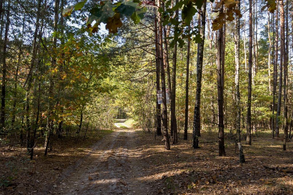 Działka leśna z prawem budowy na sprzedaż Czarnówka  15000m2 Foto 10