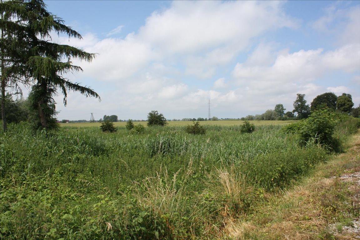 Działka rolna na sprzedaż Świerznica, Stegna  80300m2 Foto 4
