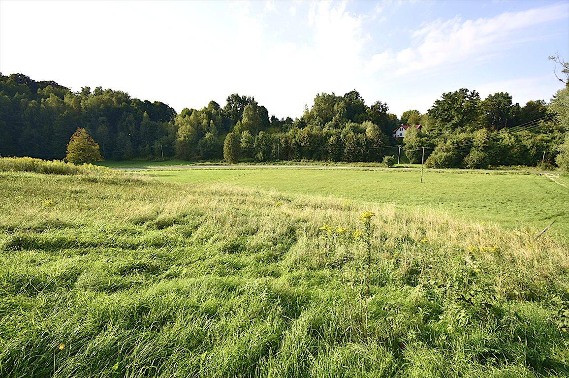 Działka rolna na sprzedaż Kazimierz Dolny  10000m2 Foto 4