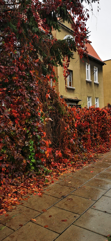 Mieszkanie dwupokojowe na sprzedaż Poznań, Grunwald, Dwupoziomowy lokal do zamieszkania, Jarochowskiego 55  31m2 Foto 3