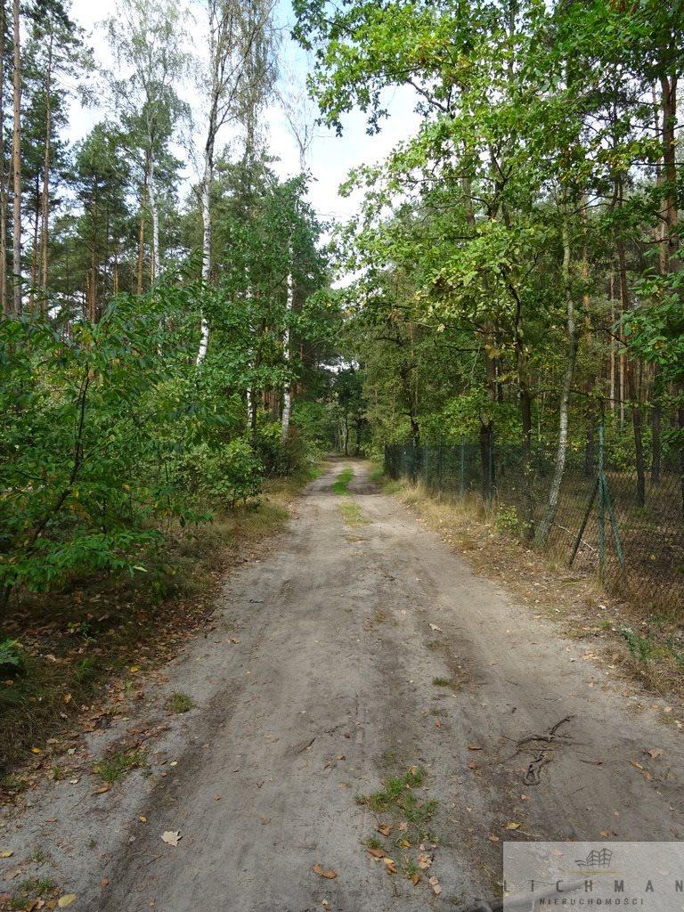 Działka leśna na sprzedaż Dziektarzew  2537m2 Foto 5