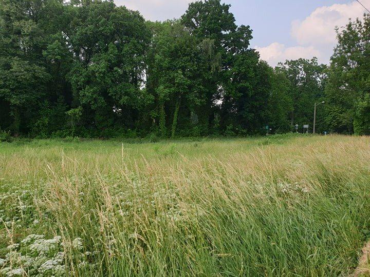 Działka rolna pod dzierżawę Chojna  2013m2 Foto 5