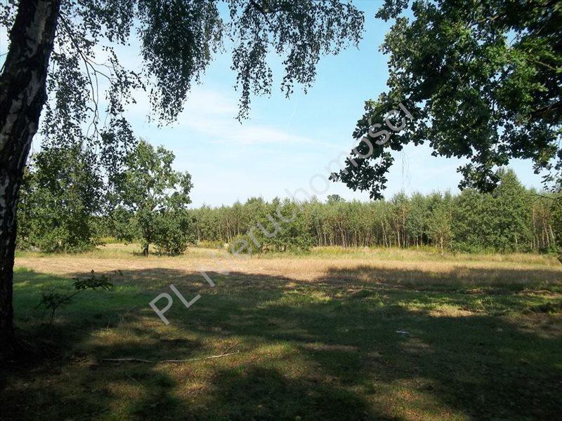 Działka rolna na sprzedaż Cisówka  10600m2 Foto 4