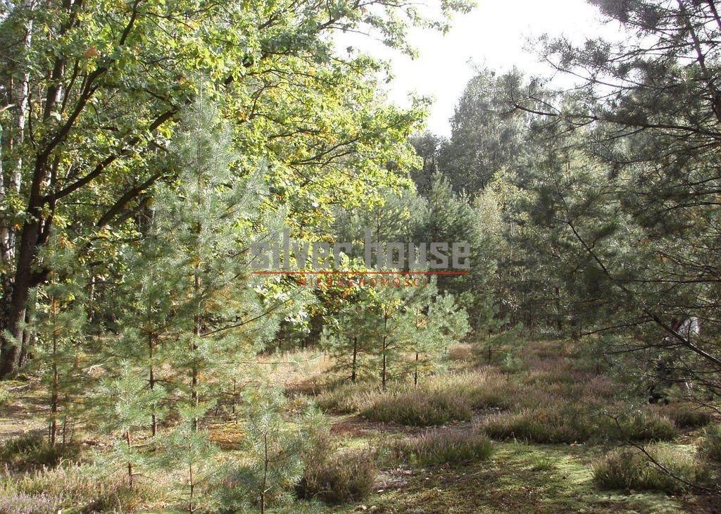 Działka siedliskowa na sprzedaż Boryszew  15000m2 Foto 1