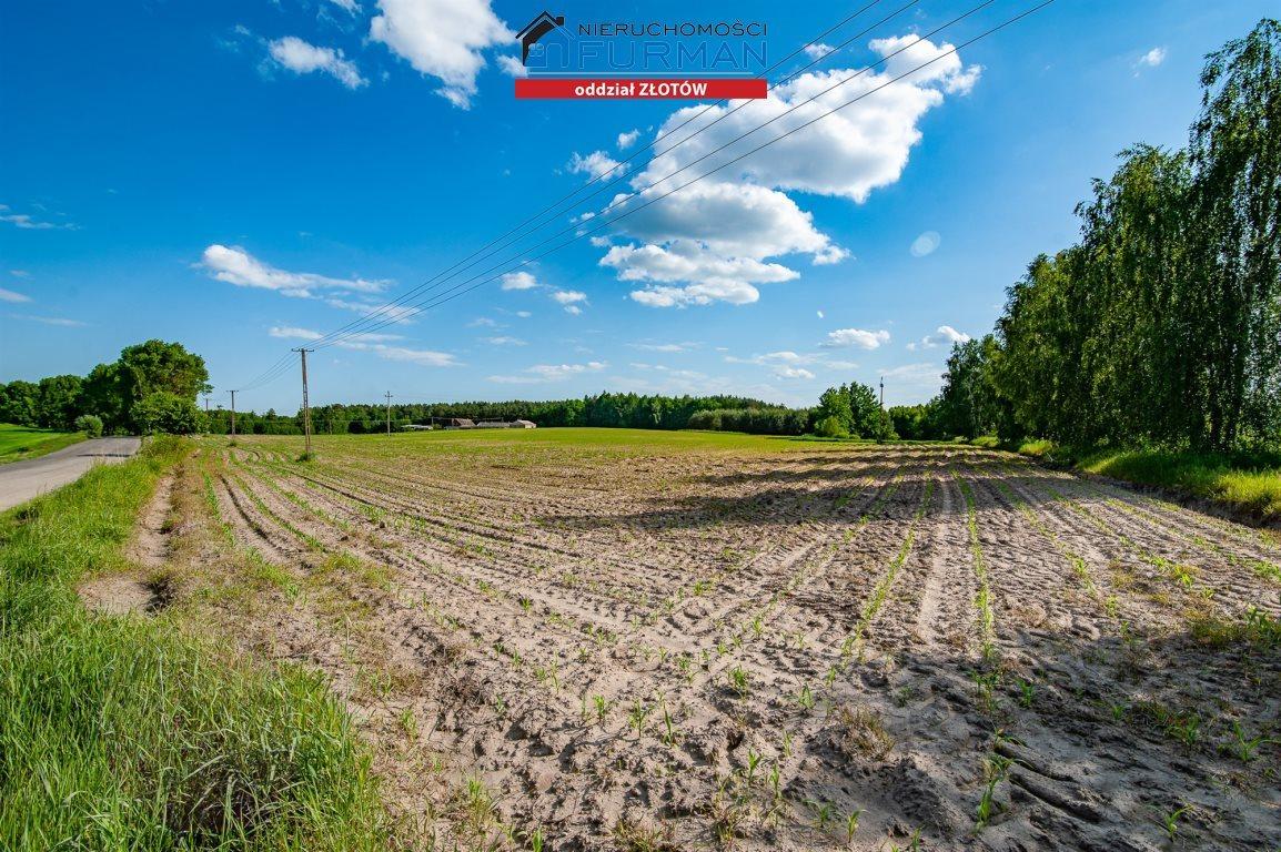 Działka rolna na sprzedaż Witrogoszcz-Kolonia  183634m2 Foto 5