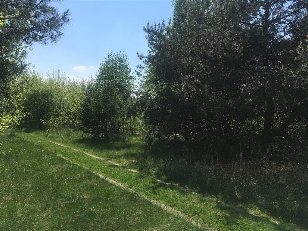 Działka rolna na sprzedaż Stare Babice, Wojcieszyn  1000m2 Foto 7
